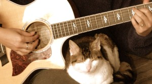 Rosie under my guitar