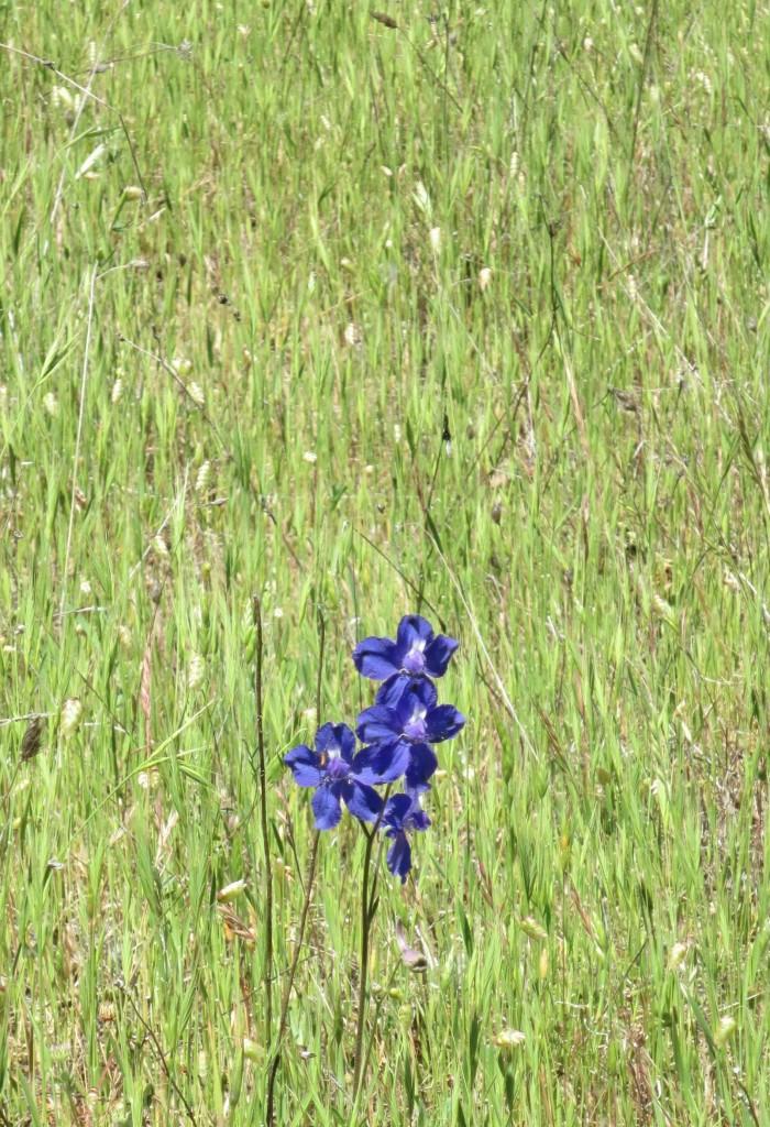 Purple flower at Sky Farm