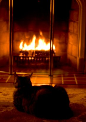 A housecat warming itself by the fire